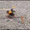 Honey Bee 2 地面にキス編