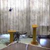 SOLO PRO 128 EC145よりうちの猫が目立ってしまった