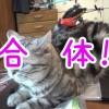 ラジコンヘリと合体するネコ